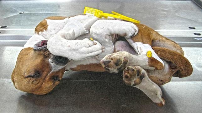 Va preso tres meses por matar a su perro de una patada - Video