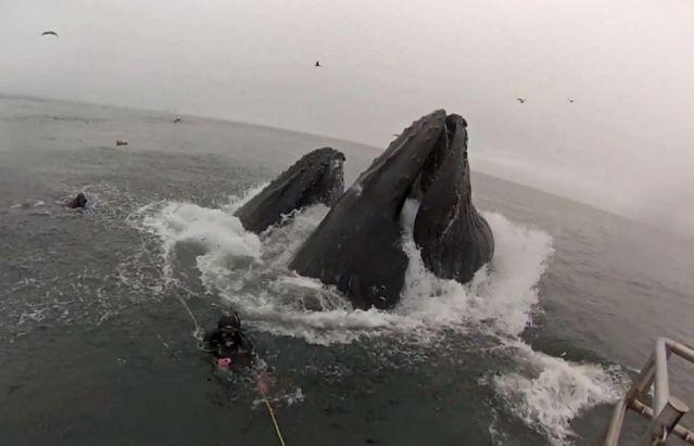 Video: buzos a punto de ser comidos por un par de ballenas
