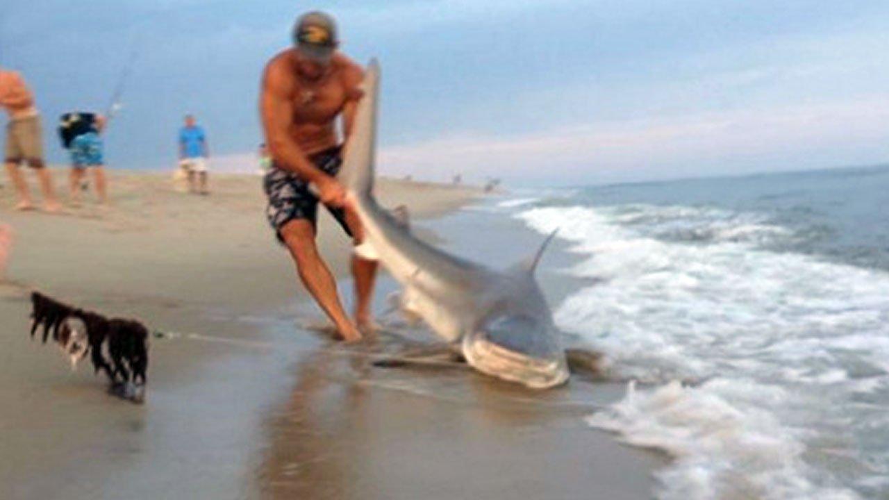 Video insólito: hombre pesca un tiburón en la playa