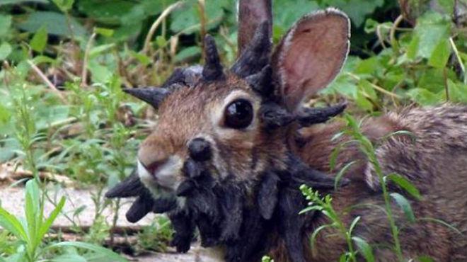 Fotos: éste el el conejo más feo del mundo