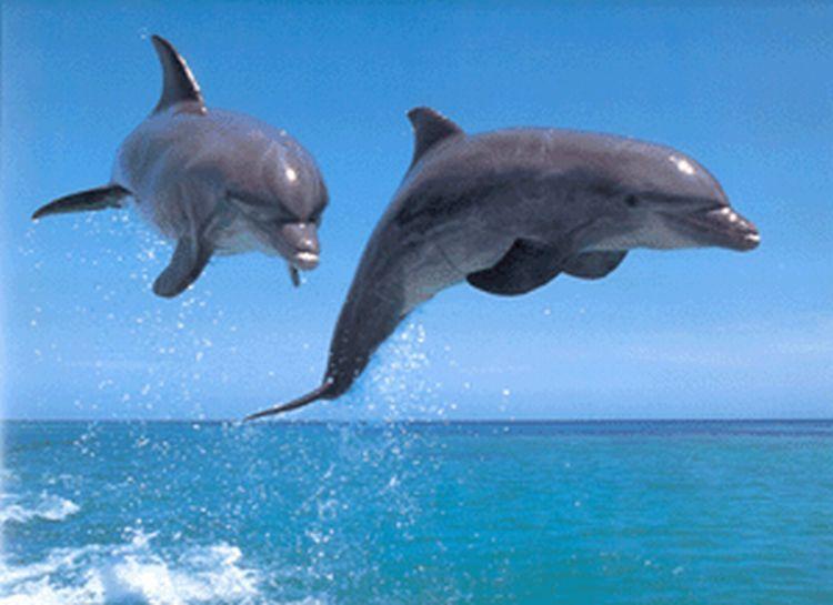 Insólito: Así se reconocen los delfines entre ellos