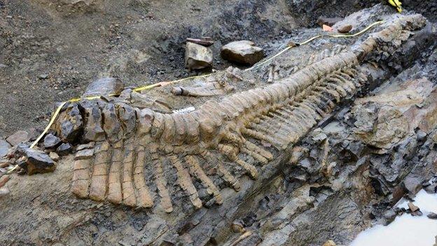 Hallan restos de dinosaurio de hace 72 millones de años en Coahuila