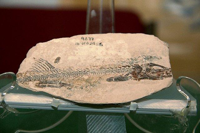 Chiapas: Hallan pez de hace 90 millones de años
