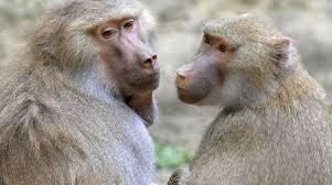 Expulsan a monos de un zoológico por vándalos