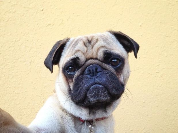 Fotos del perro más fotogénico del mundo