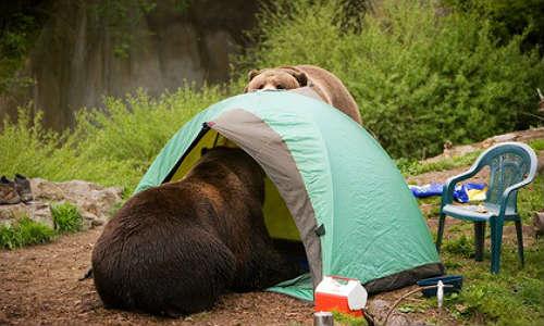 Qué hacer ante un encuentro cara a cara con un oso