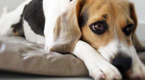 ¿Los perros pueden imitar todo lo que hacen sus amos?