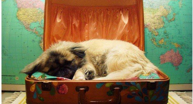 Información para salir de viaje con tu mascota