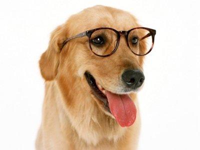 Los tipos de inteligencia de los perros