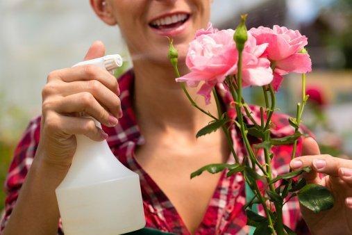 Cómo preparar pesticidas ecológicos