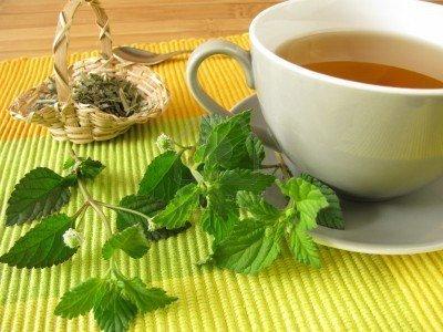 Qué plantas medicinales sirven para qué enfermedades