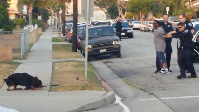 Video: Perro baleado frente a su dueño por policía
