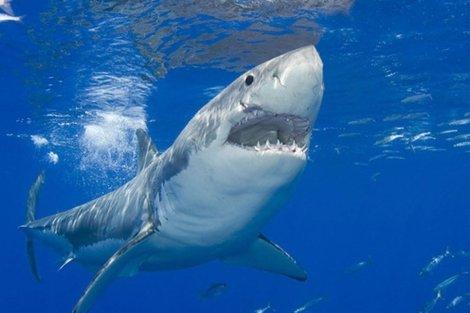 ¿Qué es y cómo funciona un imán espanta tiburones?