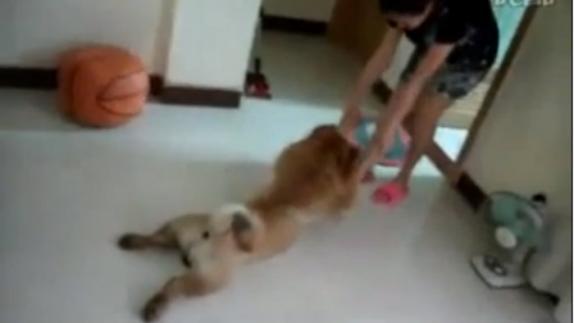 Video: La odisea para bañar a este perro