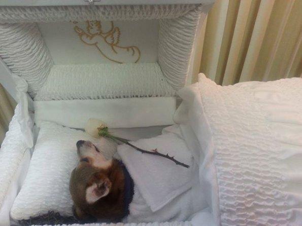 Enfrenta multa por velar a su perro en funeraria