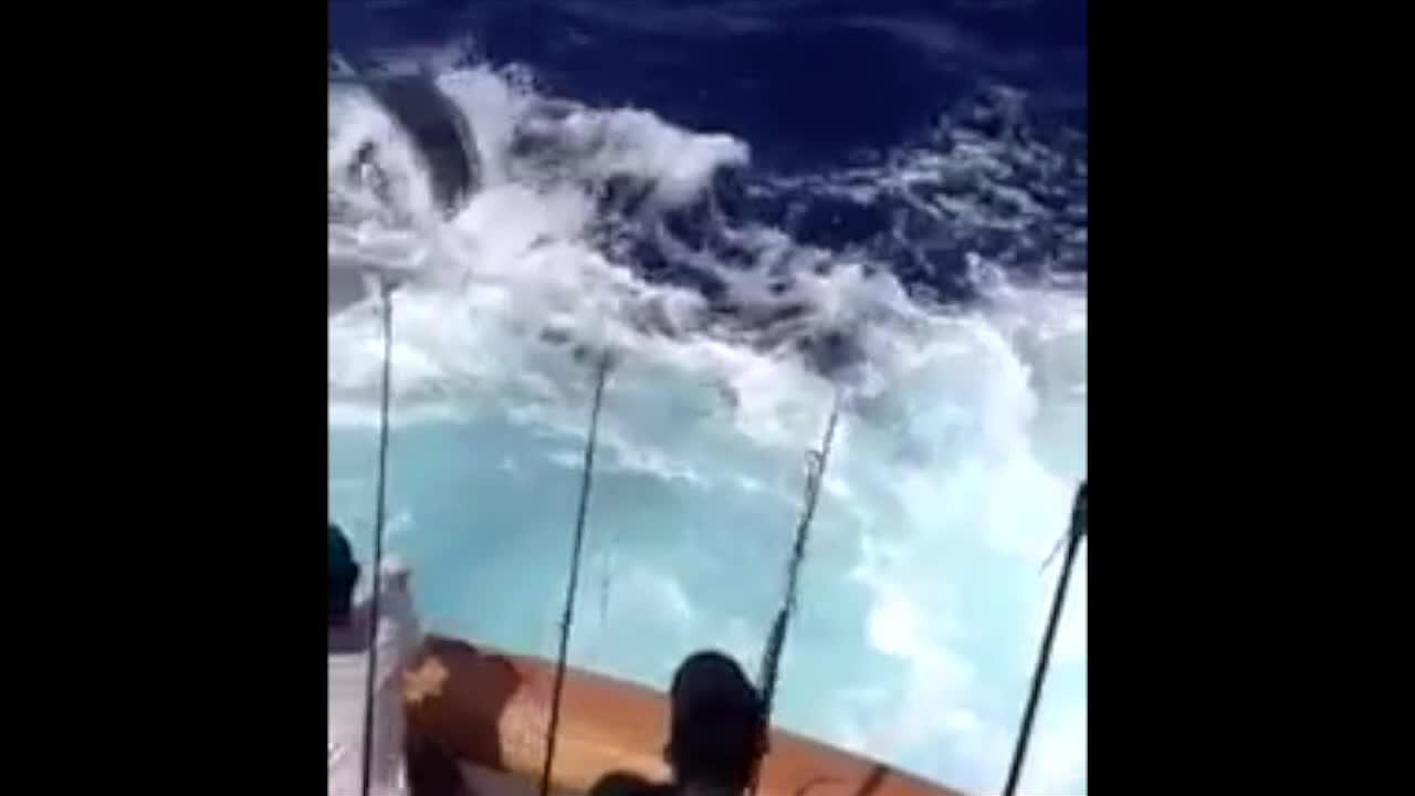 Video insólito: pez aguja salta a un barco