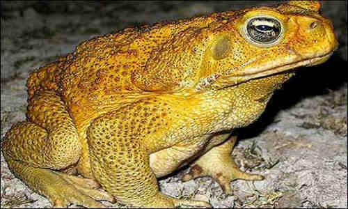 Animales que ponen en peligro los ecosistemas