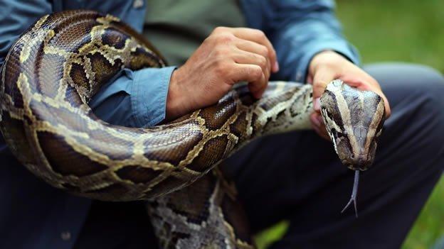 Serpiente pitón mata a dos niños mientras dormían