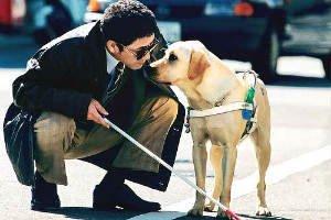 Conoce la diversidad de tareas que los perros pueden hacer