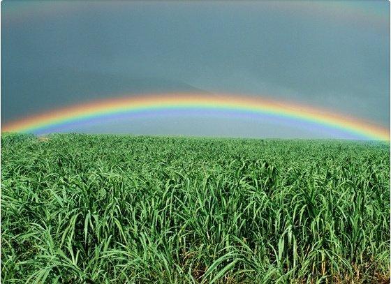 Curiosidades que desconoces sobre los arcoiris