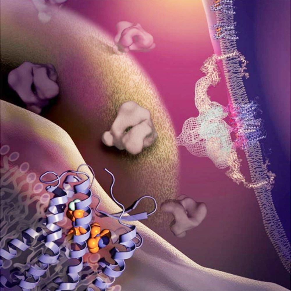 Cómo infecta el VIH las células