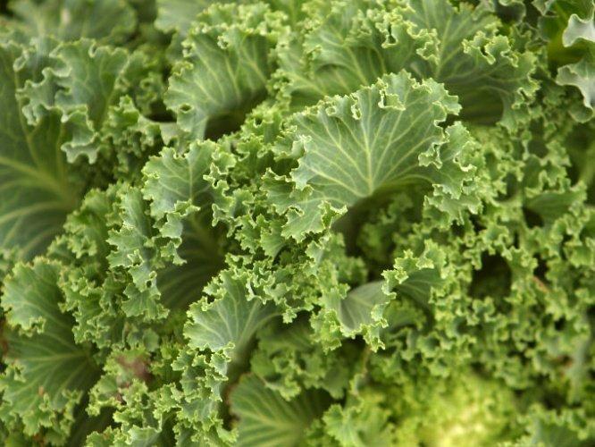 Las ventajas de consumir Kale