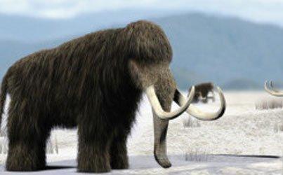Conoce la causa de la extinción de los mamuts