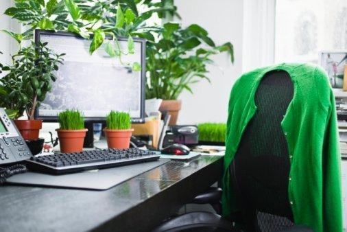 Beneficios de tener una planta en tu oficina