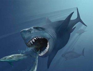 Hallan restos del tiburón más grande de la historia