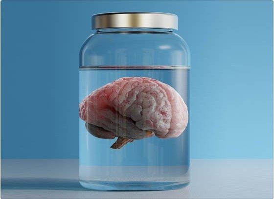¿Cuándo deja de crecer el cerebro?