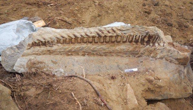 Encuentran fósil de dinosaurio en Canadá - Fotos