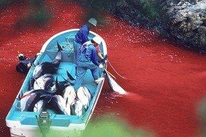 Japón busca abrir parque marino para comer ballenas y delfines
