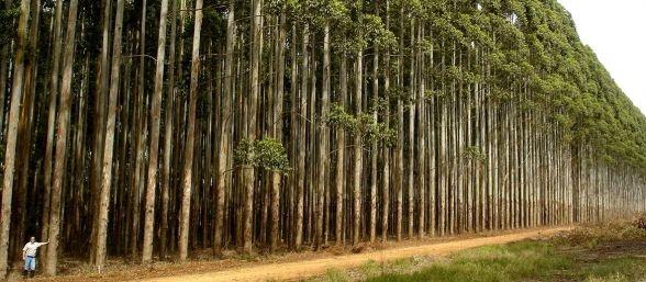 Hallan árboles de oro en Australia