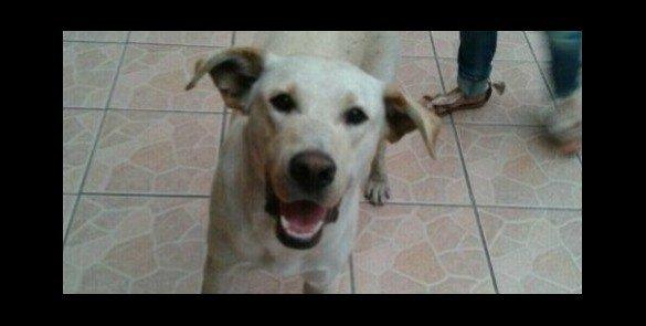 Curiosidades: Creen que el origen del perro es europeo