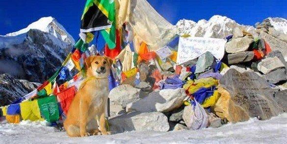 Rupee: El primer perro en conquistar el Everest - Fotos