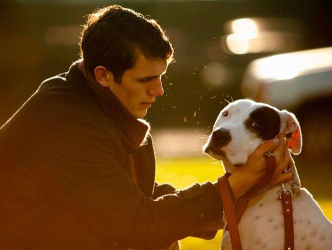 Descubre qué saludable es tener un perro