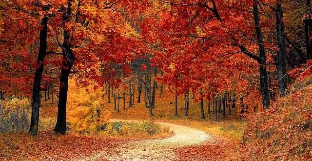 Motivos por los cuales en otoño cambia el color de las hojas de los árboles
