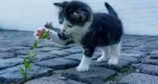 Amor, paciencia y disciplina, las mejores herramientas para educar a un gatito