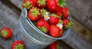 Estados Unidos contempla la idea de imponer aranceles a fresas y pimientos mexicanas